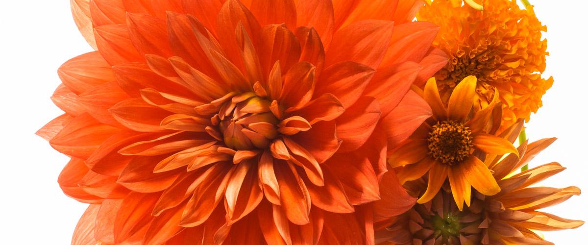 花のある暮らし 毎日がクリエイティヴ