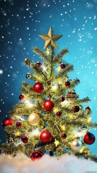 【第十二回】クリスマスカラーの秘密イメージ