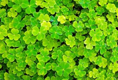 【第十五回】聖なる緑の日~聖パトリックの祝日イメージ
